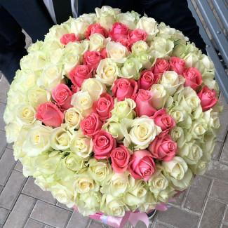 101 Trandafir cu Numere