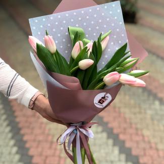 11 Нежных Тюльпанов
