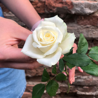 Белые Розы Штука 50-60 см