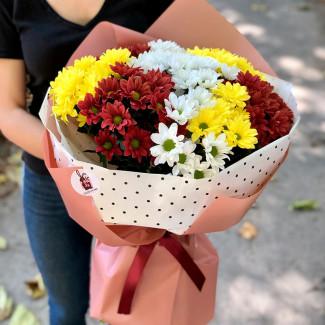Разноцветные хризантемы фото