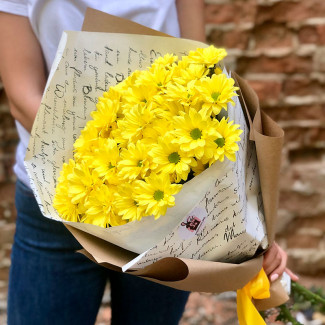 Жёлтые хризантемы фото