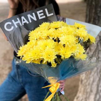 желтые хризантемы фото