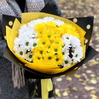 Жёлтые и белые хризантемы фото
