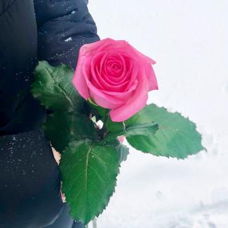 Trandafiri Roz la Bucată...