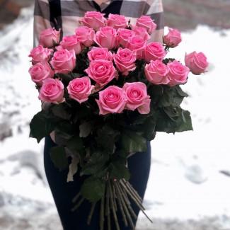 25 Trandafiri Roz Fotografie